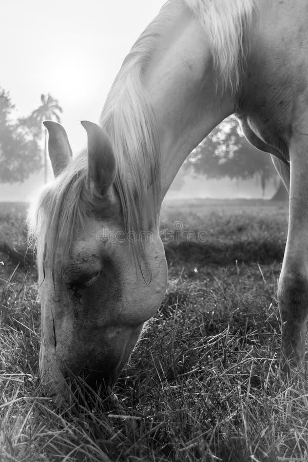 Koń w Kolkata majdanie obraz royalty free