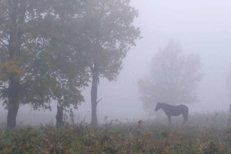 Koń w mgle fotografia royalty free