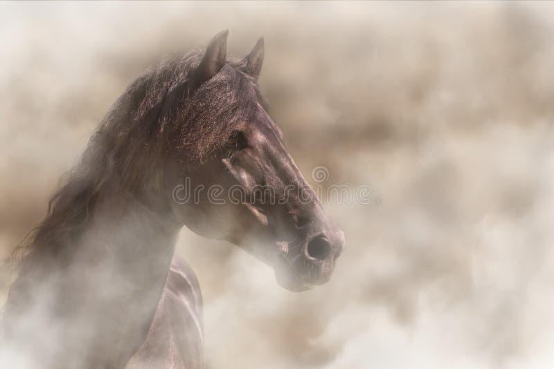 Koń w mgle zdjęcia stock