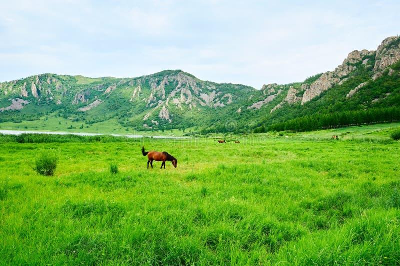 Koń w obszarze trawiastym fotografia royalty free