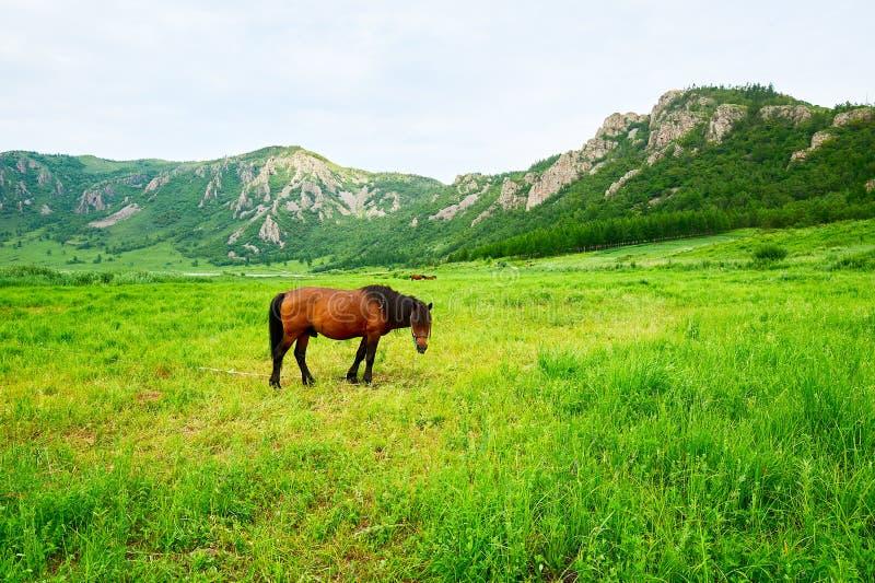 Koń w obszarze trawiastym obraz stock