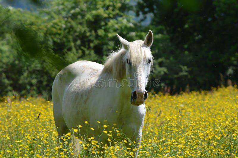 Koń w pobliskim zdjęcie stock