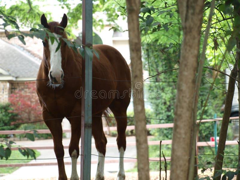 Koń w podwórzu i Frontowym jardzie obraz royalty free