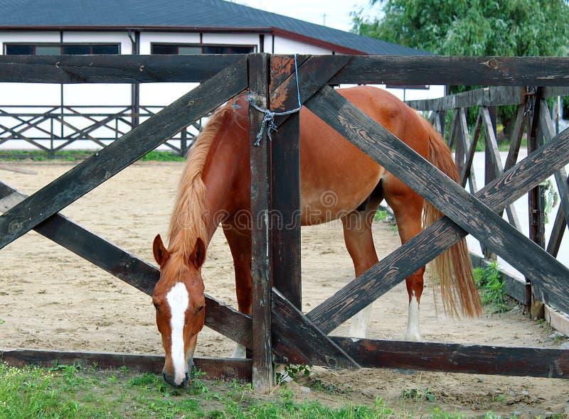 Koń w stajence na tle lato krajobraz obrazy stock