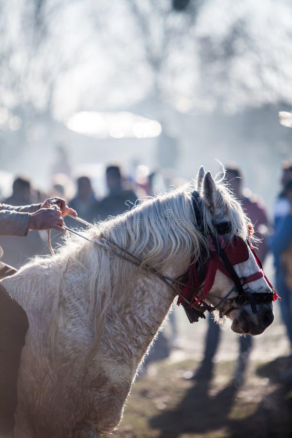 Koń z dekoruje ogranicza fotografia stock