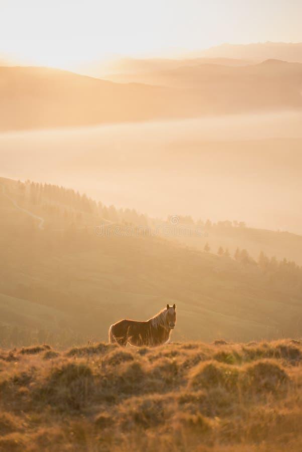 Koń z pasmem górskim behind z zmierzchem behind fotografia stock