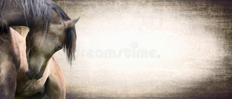 Koń z pięknie wyginającą się szyją na tekstury tle, sztandar ilustracja wektor