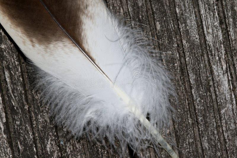Kończy część piórko gąska sęp w totalview na wietrzejącej ziemi zdjęcie stock
