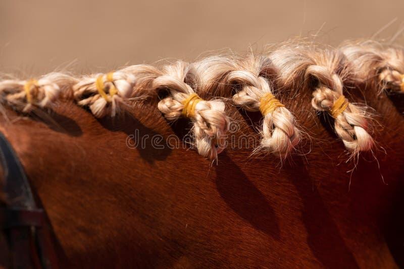 Końska grzywa z redaguje - błękitnych kwiaty zdjęcia stock