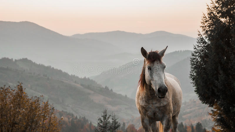 Końska paśnika ranku mgły rosa obraz stock