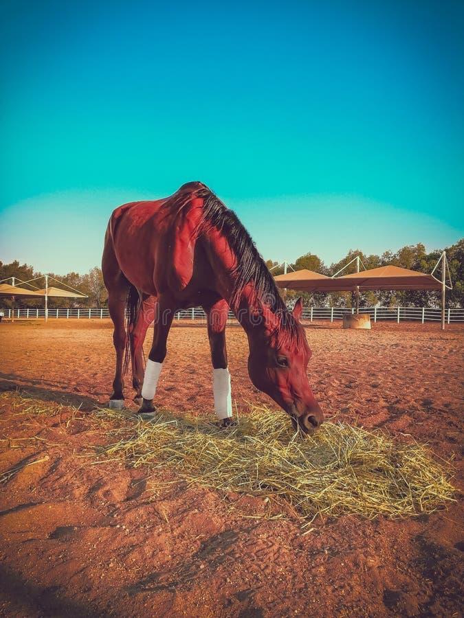Końska przejażdżka fotografia stock