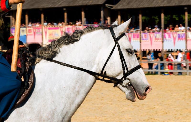 Koński biel głowy portret zdjęcia stock