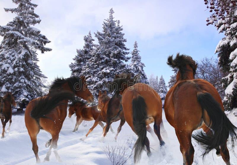 Koński cwał w zimie zdjęcie royalty free