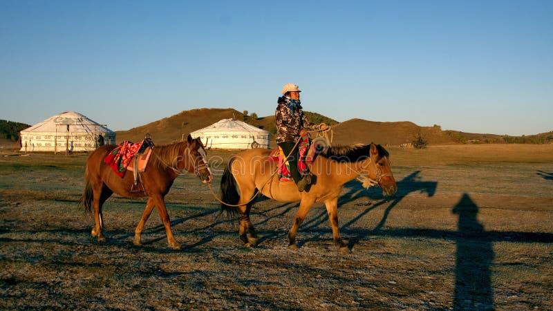 Koński czynsz zdjęcie stock