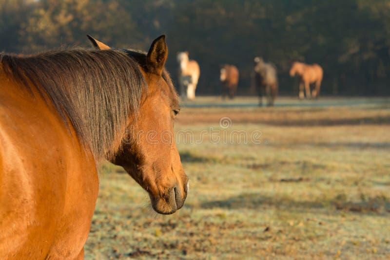 Koński drzemanie w wczesnego poranku słońcu obrazy stock