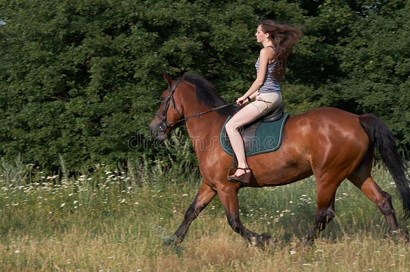 koński dziewczyna bryk zdjęcie stock