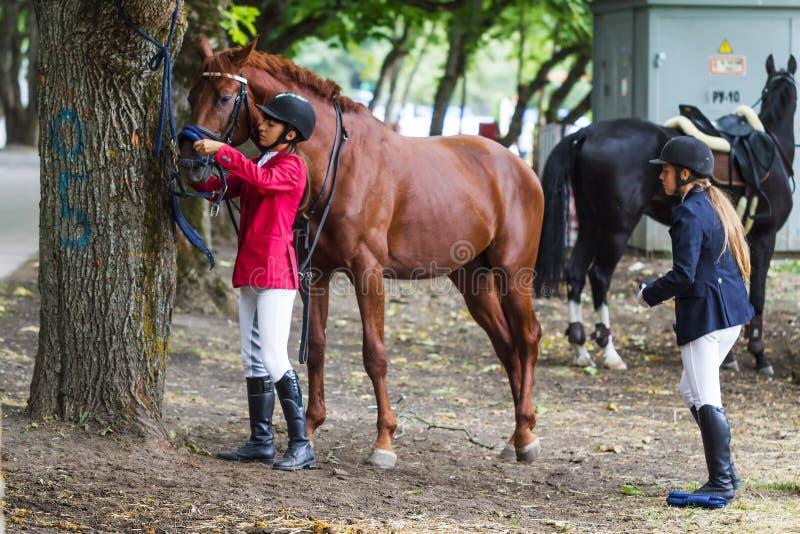 koński horsewoman fotografia royalty free