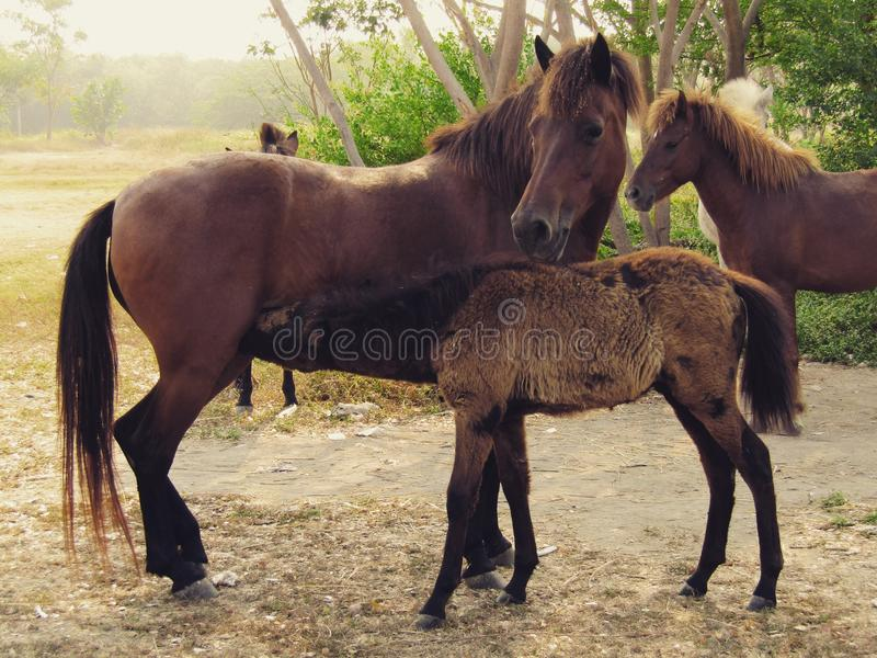 Koński karmienie zdjęcia stock