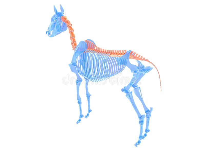 koński kręgosłup royalty ilustracja