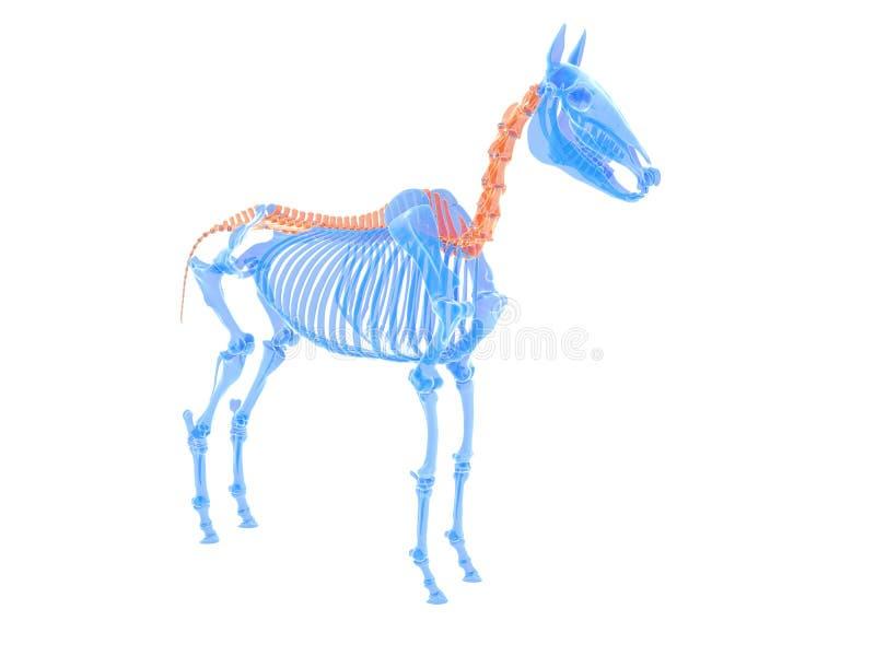 koński kręgosłup ilustracja wektor