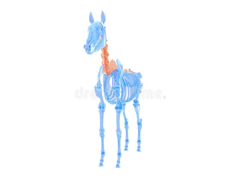 koński kręgosłup ilustracji