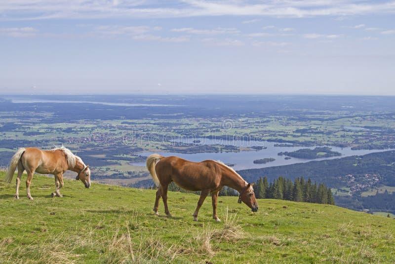 Koński lato na górze w Babaria zdjęcie stock