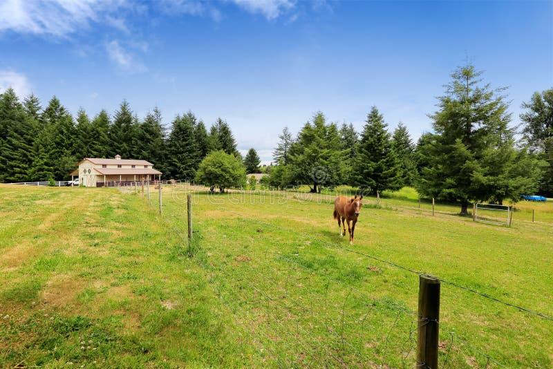 Koński odprowadzenie na wielkim rolnym polu z stajnią zdjęcie stock