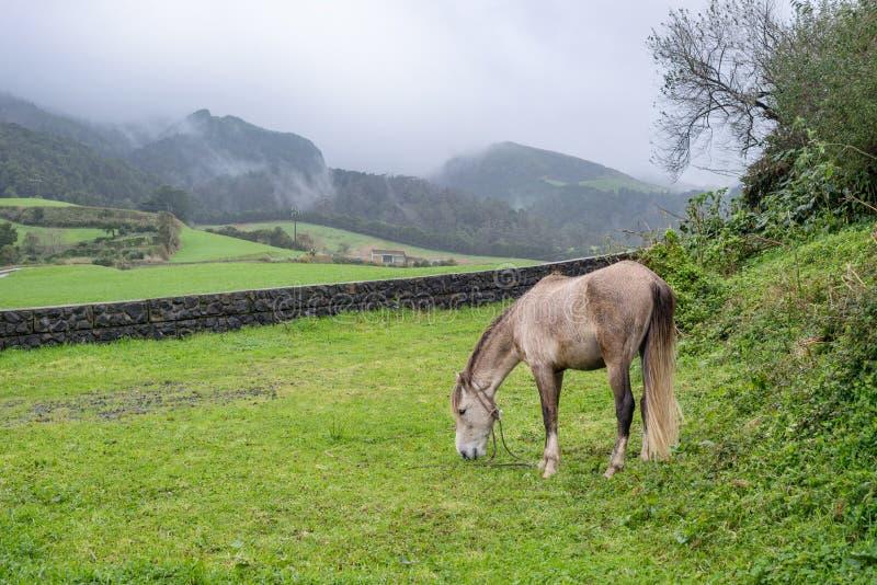 Koński pasanie na paśniku pod górami podczas chmurnego dnia obrazy royalty free