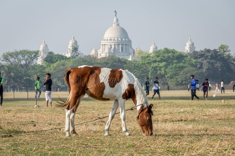 Koński pasanie przy majdanem wielki otwarty boisko w Kolkata Calcutta, Zachodni Bengalia, India obrazy royalty free
