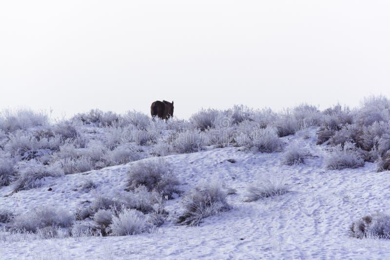 _ Koński pastwiskowy samotny Pustynny teren przy Balkhash Zima krajobraz blisko jeziornego Balkhash obrazy stock