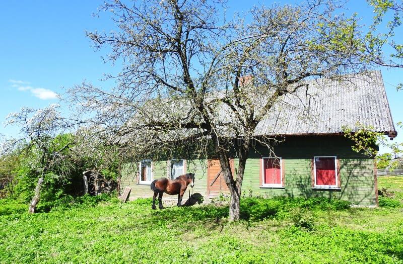 Koński pobliski stary dom, Lithuania zdjęcie royalty free
