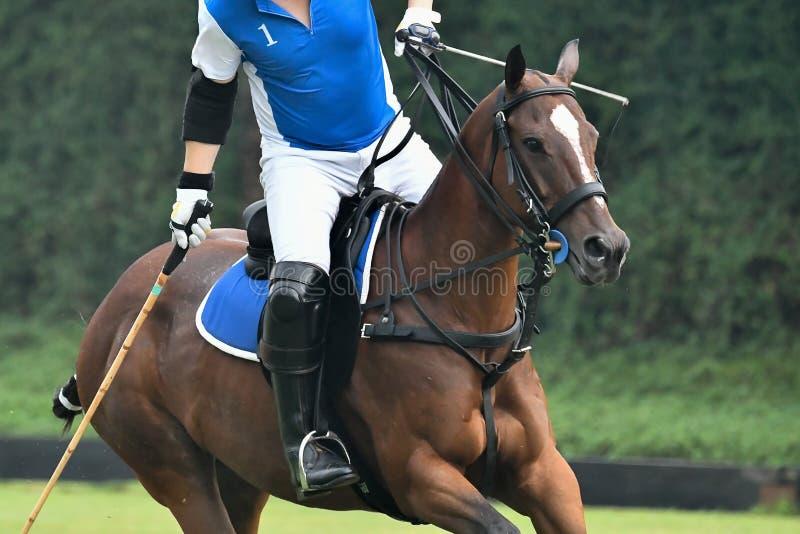 Ko?ski polo gracz w b??kitnej polo koszula jedzie konia w polo dopasowaniu fotografia royalty free