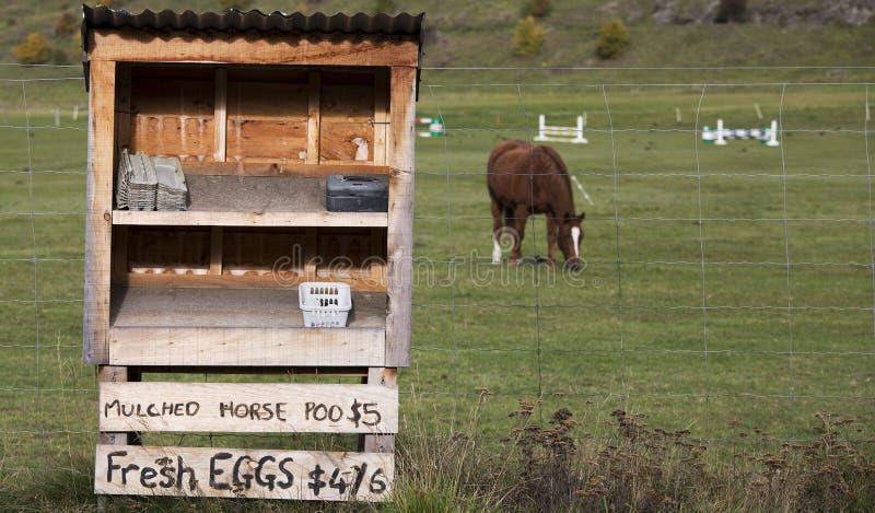 Koński Poo i jajka dla sprzedaży zdjęcia royalty free