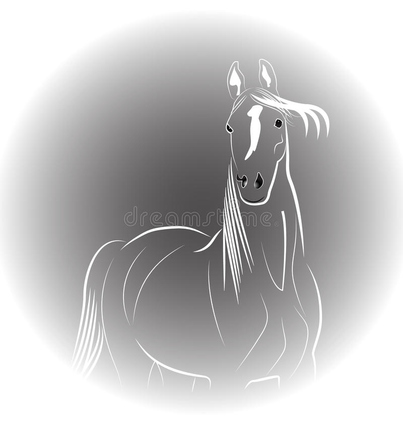 Koński portret ilustracji