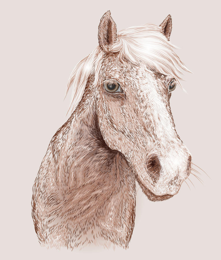 Koński portret ilustracja wektor