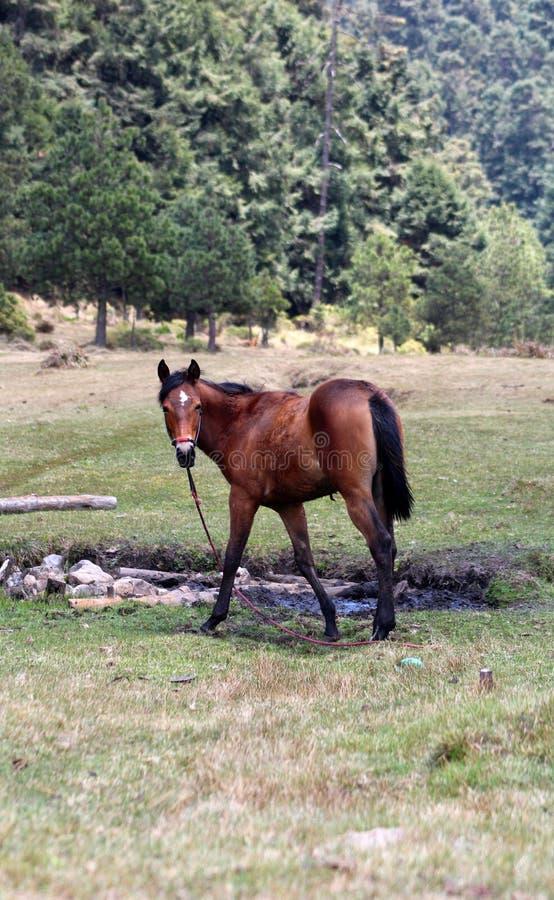 Koński pozować obrazy stock