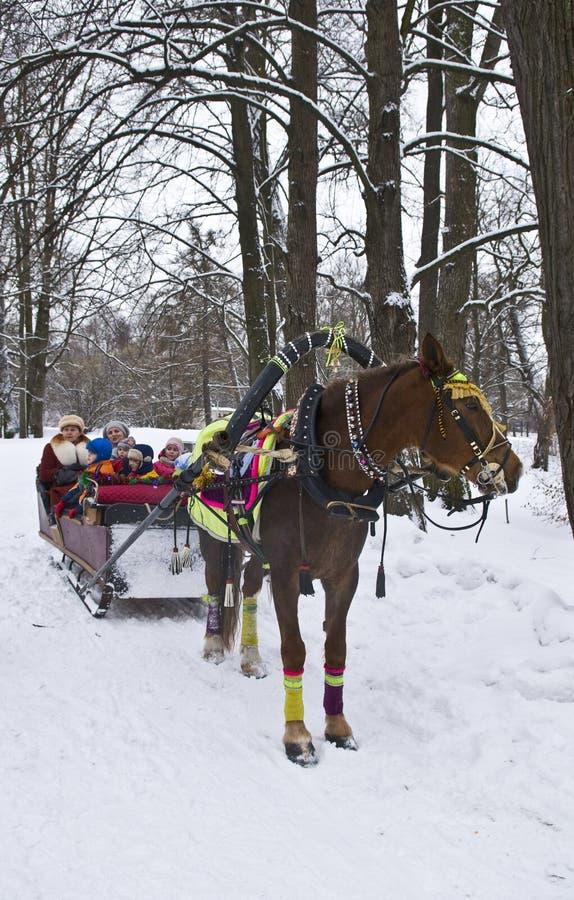 Koński sanie w zima parku obrazy royalty free