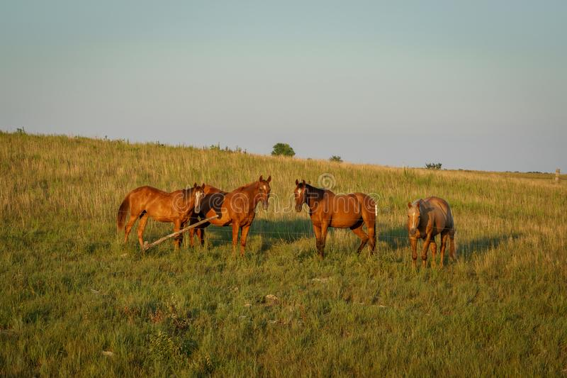 Koński stado zdjęcie royalty free