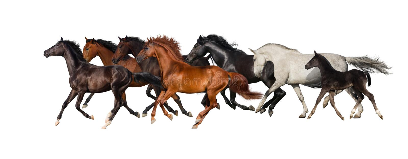 Koński stado zdjęcie stock