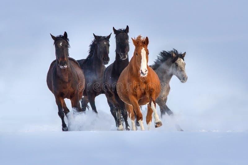 Koński stado biegający w śniegu obrazy stock
