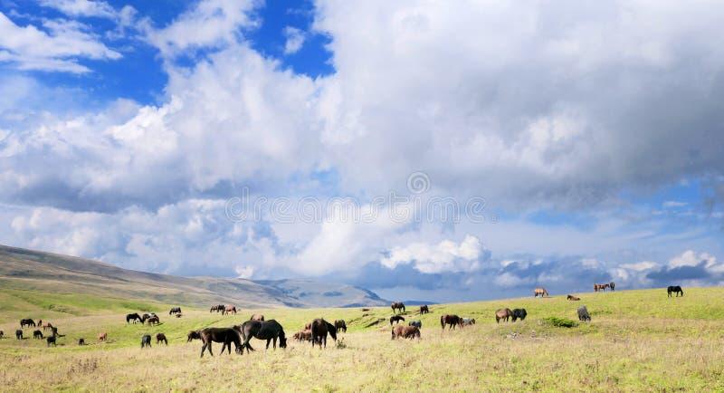 Koński stado i niebo zdjęcie stock