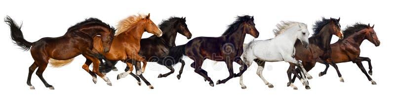 Koński stado odizolowywający zdjęcia stock