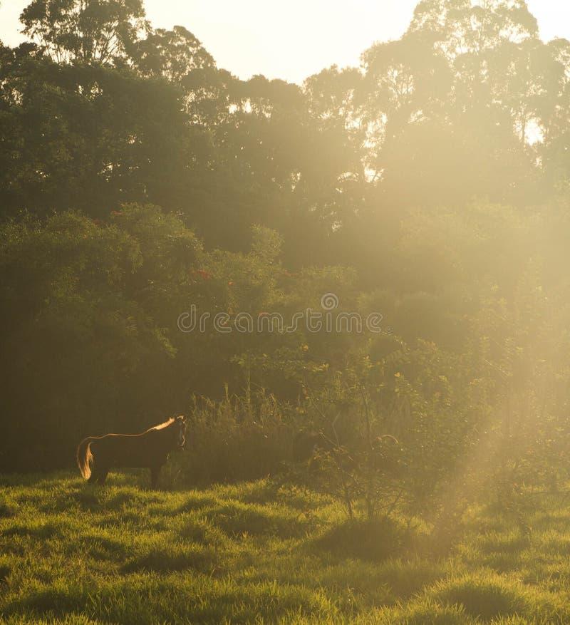 Koński wschód słońca obraz stock