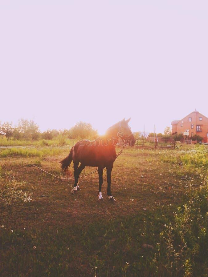Koński zmierzch zdjęcie royalty free