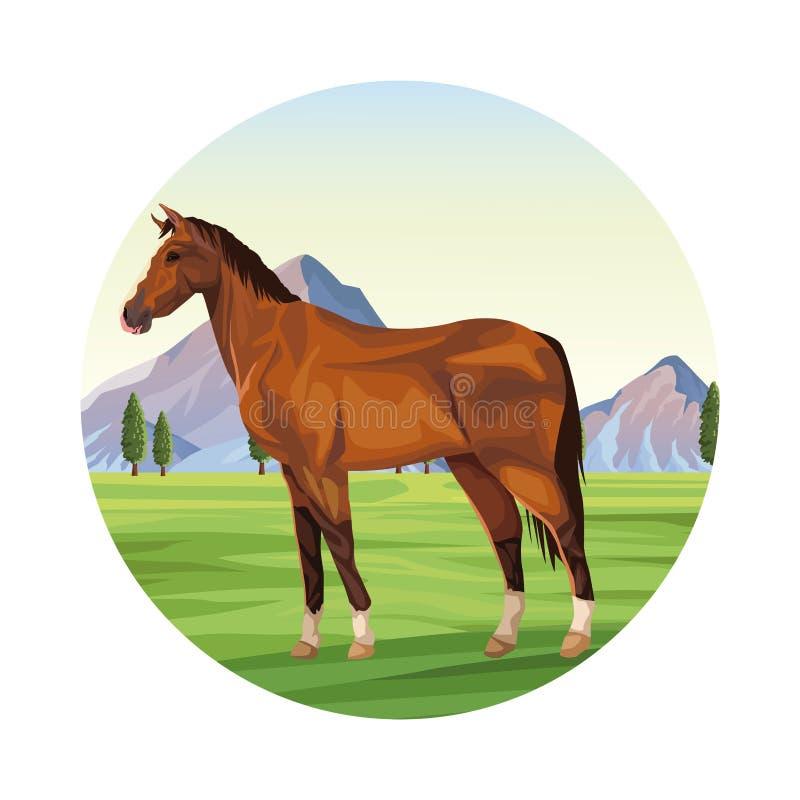 koński zwierzęta gospodarskie royalty ilustracja