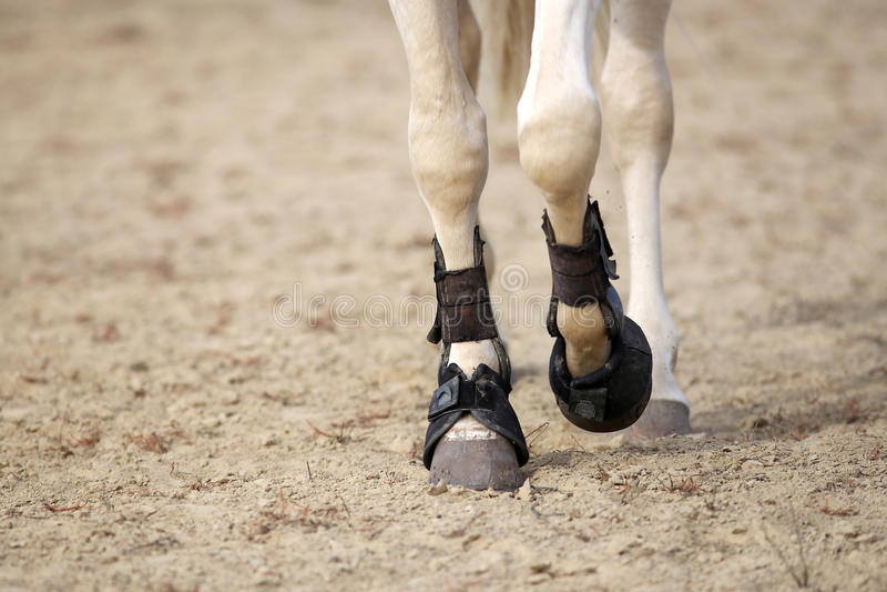Końskich nóg zamknięty up obraz royalty free
