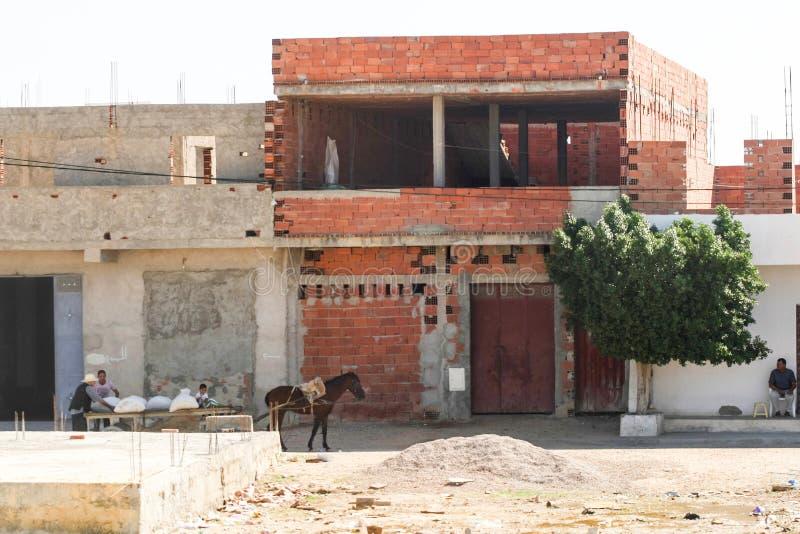 Końskie ciągnięcie fury w Kairouan zdjęcie royalty free