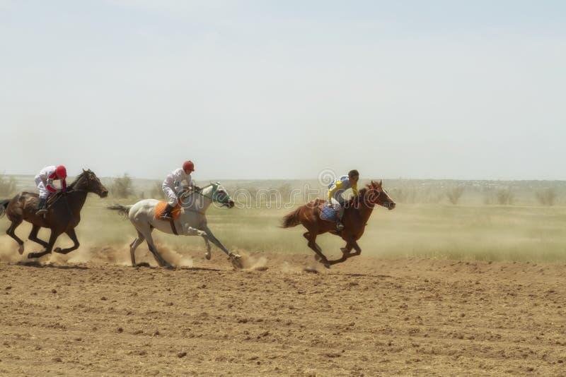Końskie rasy obraz stock
