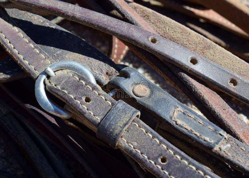Końskie uzdy zdjęcie royalty free