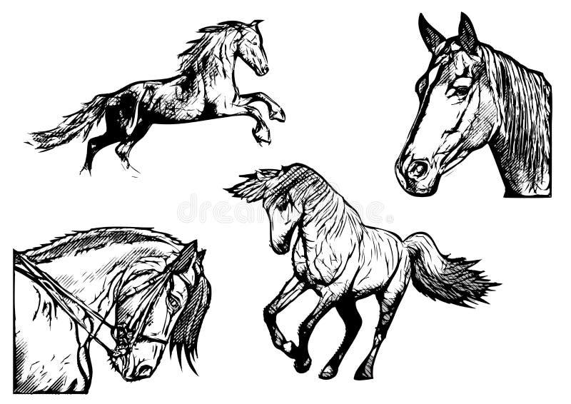Końskie wektorowe ilustracje ilustracji